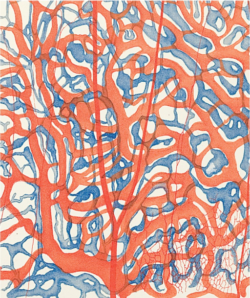 <p>Image of a section through the olfactory tissue of a rabbit, with blood vessels in red, lymph ducts in blue. Studien, vol. 1, pl. 37, fig. 3.</p>