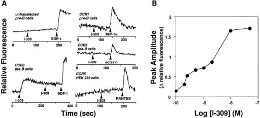 I-309 is an agonist  for CCR8. (A) Receptor specificity and homologous densensitization. [Ca2+]i was monitored by  ratio fluorescence of Fura-2–loaded  pre–B cells or HEK 293 cells stably transfected with plasmids encoding CC chemokine receptors  as indicated adjacent to each  tracing. Cells were stimulated  with chemokines 50 nM at the  times indicated by arrowheads.  Data are representative of at least  three experiments with CCR8-expressing cells. (B) Potency.  The amplitude of the peak of the  calcium transient elicited by the  indicated concentration of I-309  in CCR8 transfectants is shown.  Data are representative of two  separate experiments.