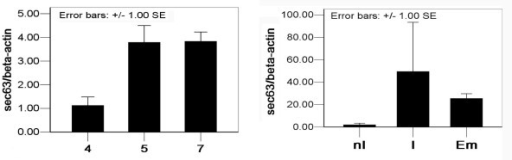 Uterine expression level of Sec63 mRNA during the early pregnancy. Real-time quantitative PCR analysis of the expression level of Sec63 mRNA in mouse uterine tissues of day 4 (4), day 5 (5) and day 7 (7) pregnancy (panel A), as well as the inter-implantation sites (nI), implantation sites (I) and embryo (Em) of day 7 pregnancy (panel B), by using the β-Actin as the housekeeping gene. In panel A and panel B, the data were normalized relative to that of day 4 and nI (reference groups) respectively.