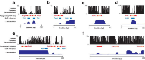 Individual yeast regulatory regions and factor binding sites(a) Rap1 binds to two adjacent sites also predicted from ChIP experiments upstream of RPS6A (chr16:378,775-378,874). (b) Reb1 binds to a canonical site upstream of TUF1 (chr15:683,707-683,806) but a non-canonical site upstream is only inferred from ChIP data (c) Mcm1 site upstream of MFA1 (chr4:1,384,893-1,384,993) exhibits hypersensitive nucleotides illustrated in Fig. 3a. (d) Hsf1 site identified by ChIP in BTN2 promoter (chr7:772,068-772,167) is identified as a footprint. (e) Two Reb1 binding sites in the REB1 promoter (chr2:336,885-337,084) are identified as footprints; a Cbf1 site predicted by ChIP shows a footprint, but a Rpn4 site defined by ChIP does not. (f) Two Pdr3 sites in the PDR5 promoter (chr15:619,227-619,476) are identified as footprints, in addition to an evolutionarily conserved region further upstream. Each panel shows per nucleotide DNase I cleavage, detected footprints (red boxes), assigned motifs (pink boxes), binding sites inferred from ChIP experiments (blue boxes), and evolutionary conservation (dark blue, Phastcons, bottom).