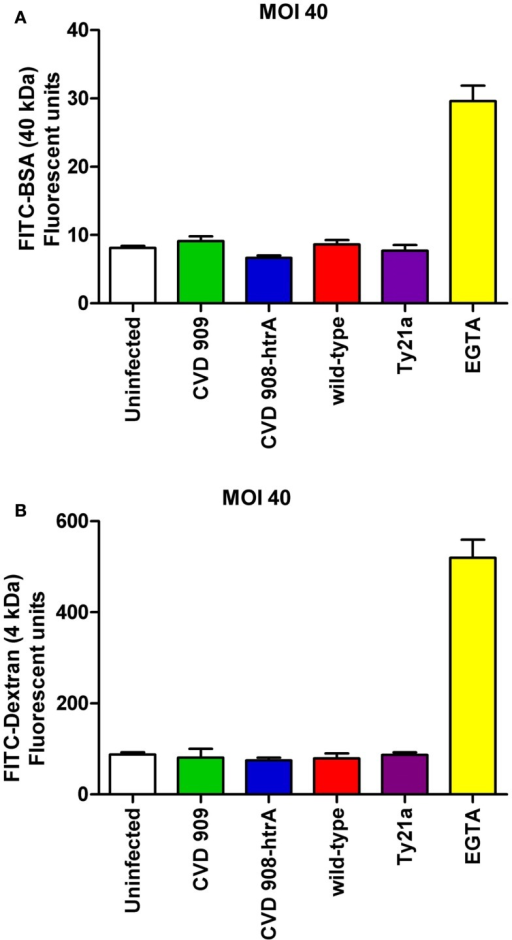 Paracellular permeability in Caco2 cell monolayers after infection with wild-type S. Typhi and its mutant strains (MOI 40:1). (A) FITC-BSA (40 kDa) net transport after infection with wild-type S. Typhi and attenuated strains. (B) FITC-Dextran (4 kDa) net transport after infection with wild-type S. Typhi or the attenuated mutants. Calcium-free medium supplemented with EGTA to disrupt TJs served as positive control. Results are expressed as mean ± SEM of triplicate samples for each condition and are representative of three experiments with similar results. p = ns compared to uninfected controls (ANOVA).