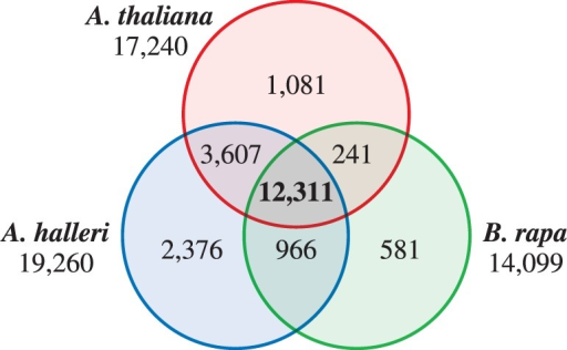 Conservation of papilla-expressed genes in Brassicaceae. Venn diagram for the number of genes in papilla cells from A. thaliana, A. halleri and B. rapa.