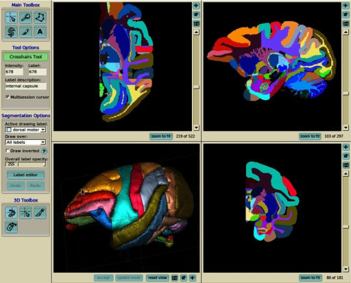 Example of 3dBAR's data interoperability. Labeled volume of macaque's brain (Bowden and Dubach 2003) loaded into ITK-SNAP (Yushkevich et al. 2006). Note that the structures' names, abbreviations and colors are consistent among different forms of the reconstructions throughout the service