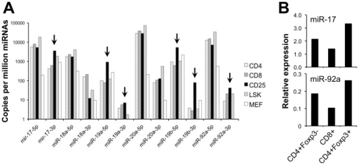 The miR-17∼92a cluster of miRNAs are enriched in Tregs.(A) Relative expression of the miR-17∼92a miRNAs species determined by Illumina high throughput sequencing. Shown is expression in sorted CD4+CD25+ Tregs compared to CD4+CD25− conventional T cells, CD8+ T cells, bone marrow Lin−Sca+Kit+ stem cells, and embryonic fibroblasts (MEF) from C57BL/6 mice. The arrows indicate those species enriched in Tregs. (B) Quantitation of two miR-17∼92a miRNAs by Taqman-based RT-PCR. All miRNA levels were normalized to U6 snRNA. The indicated populations were sorted from Foxp3IRES-GFP mice, in which Foxp3 expression was identified by GFP fluorescence.