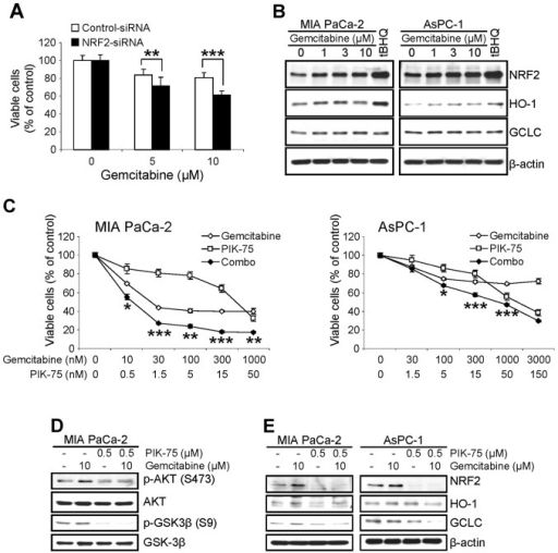 PIK-75 potentiates gemcitabine-induced cytotoxicity in pancreatic cancer cells. (A) AsPC-1 cells, transfected with siRNA (NRF2 vs. control), were treated with gemcitabine for 48 h and the viable cells were determined by MTT assay. Data are presented as mean ± SD performed in triplicate. **P≤0.01 and ***P≤0.001. (B) MIA PaCa-2 and AsPC-1 cells were treated with increasing amount of gemcitabine for 8 h and western blot analysis was performed with indicated antibodies. β-actin was used as a loading control. (C) Cells were treated either gemcitabine, PIK-75 alone or in combination of both drugs for 48 h and viable cells were measured by MTT assay. Data are presented as mean ± SD from two independent experiments performed in triplicate. *P≤0.05; **P≤0.01; and ***P≤0.001. (D) MIA PaCa-2 cells were treated with gemcitabine, PIK-75 or combination of both drugs for 8 h and western blot analysis was performed with indicated antibodies. GSK3β used as a loading control. (E) Cells were treated with gemcitabine, PIK-75 or combination of both drugs for 8 h and western blot analysis was performed with indicated antibodies. β-actin was used as a loading control.