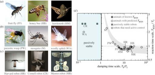 Control requirements for hovering insects, hummingbirds and flapping-wing robots. (a) Insects of varying size whose reaction time has been measured or estimated: fruit fly (typical body length 2.7 mm), honeybee (16 mm) and hawkmoth (46 mm). (b) Insects with unusual damping characteristics. The viscous drag on the body of the tiny wasp (0.6 mm) is significant, the mosquito (4.4 mm) flies with its long legs extended and the woolly aphid (3.2 mm) has a fibrous coat. (c) Robots with different stabilization strategies: Harvard robot (15 mm) is externally stabilized with wire guides; Cornell robot (220 mm) has large sails; Mentor robot (360 mm) uses sensory feedback control. (d) Reaction time needed to stabilize flight for hovering animals (circles) and robots (squares). Reaction time is known for the fruit fly, honeybee and hawkmoth (filled circles) and predicted for other flyers (open symbols). Predictions are determined by the rule of thumb that reactions must be six times faster than the instability, with variations within the grey band due to differences in the unplotted parameter TF/TI. (Online version in colour.)
