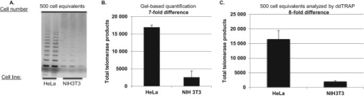 ddTRAP detection of mouse telomerase. Extracts from one million HeLa and one million NIH3T3 mouse fibroblasts were prepared. Following lysis (40 μl), 1-μl of the lysate (25 000 cell/μl) was added to a 50 μl extension reaction (extension product concentration = 500 cells/μl). One-microliter of the extension reaction was used for either the gel based TRAP or the ddTRAP assay. (A) Gel analysis (10% PAGE) of HeLa compared to NIH3T3 cells. Gel was stained with Gel red, a double stranded DNA binding dye. (B) ddTRAP total products generated (molecules per microliter output multiplied by 20 μl). Quantification showed an eight-fold difference in extension products Eqs. = equivalents. (C) Quantification of scanned images from A (ImageJ, http://imagej.nih.gov/ij/, (22)) showing a seven-fold difference which is similar to ddTRAP quantification.
