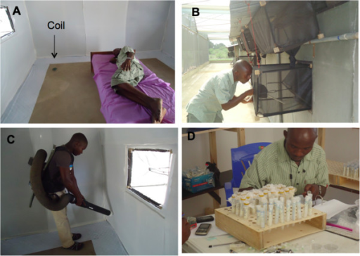 Process of collecting mosquitoes from experimental huts. A: A coil placed on the floor 0.5 m from the volunteer B: HN collecting mosquitoes from exit traps using a mouth aspirator; C: AM collecting resting mosquitoes using a backpack aspirator; D: HN sorting mosquitoes and keeping them in individual tubes for checking oviposition.