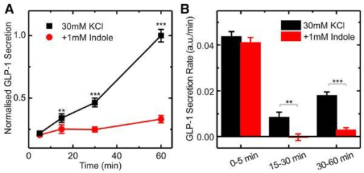 Effect of Indole on KCl Stimulated GLP-1 Secretion(A) Cumulative GLP-1 secretion from GLUTag cells stimulated with 30 mM KCl, measured at different time points. Cells were incubated with and without 1 mM indole, and secretion was normalized to the 60 min, 30 mM KCl time point (average value 232 pg/ml) from the same experiment. Each data point was calculated by averaging over six independent measurements.(B) Calculated rates of GLP-1 secretion over the time periods indicated, calculated from the measurements obtained in (A).Data represent the mean ± SEM. **p < 0.01, ***p < 0.001 by Student's t test.