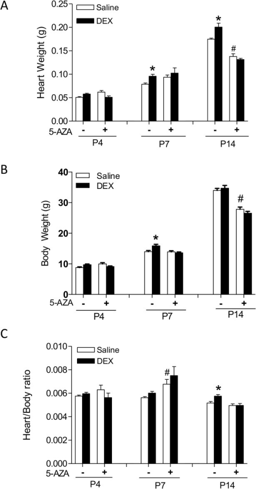 5-AZA inhibits dexamethasone (DEX)-mediated effects on heart development in neonatal rats.Newborn rats were treated with tapered dose of DEX in the absence or presence of 5-AZA during the first three days of postnatal life. 5-AZA was administered 30 minutes prior to the DEX treatment. Heart and body weights were determined in day 4 (P4), day 7 (P7) and day 14 (P14) neonatal rats. Data are mean ± SEM, n = 5–21. * p<0.05, DEX vs. Saline; # p<0.05, +5-AZA vs. -5-AZA.
