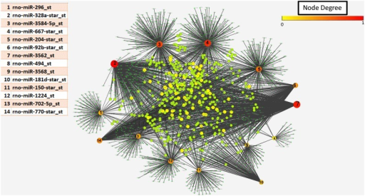 Network of up-regulated miRs and the targets (genes) controlled by them.Red/orange nodes represent miRNA, with number corresponding to the table; the larger the node the more genes targeted. The green/yellow nodes represent genes regulated by these miRNA and the black lines the connectivity between miRNa and target genese. The highest degree which was observed to be 381 targets in this network. Network is generated using Cytoscape.