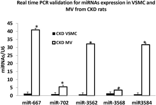 RT-PCR validation of selected miRNAs n MV and VSMC.To validate the miRNA identified by the arrays that regulate multiple genes, we performed Real time PCR on VSMc and MV to determine the expression of miR-667, miR-702, miR-3562, mir-3568 and miR-3584 and normalized by U6. Each sample (n = 3 with MV and VSMC isolated from 3 CKD rats, same samples as arrays) was assayed in triplicate. The results demonstrated increased expression in MV compared to VSMC for each of these miRNAs, confirming the array results. Data were expressed as mean ± SEM. * p<0.05, MV vs. VSMC.