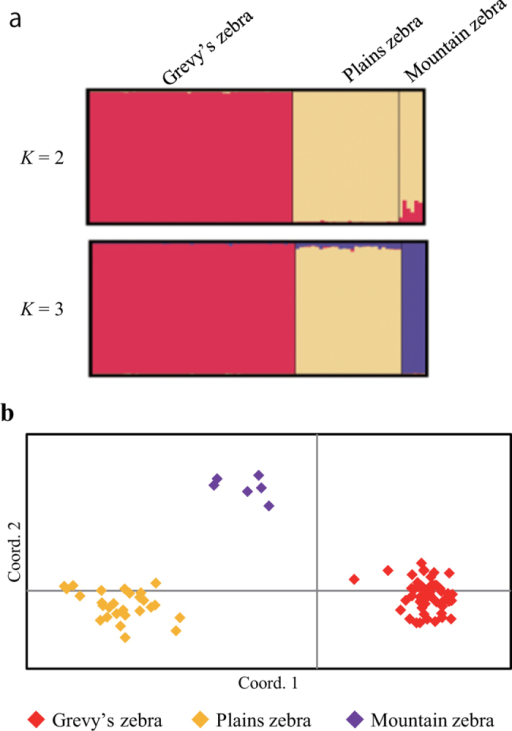 (a) Bayesian analysis of the genetic structure showing differentiation of three zebra species based on 28 microsatellite loci. (b) First and second components of a principal coordinate analysis of 28 microsatellite loci in three zebra species.