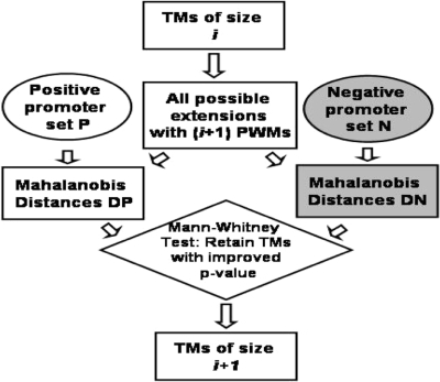 A single iteration of the method for computing TMs. Starting with single PWMs (TM of size 1), in each iteration, the top scoring TMs are retained and all extensions are assessed in the next iteration. DP and DN refer to distances from vector V0 of positive and negative vectors. A Mann–Whitney test is performed with the  hypothesis that median (DP) ≤ median (DN).