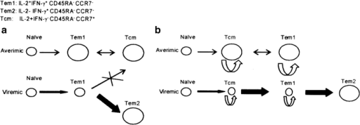 "Alternative differentiation schemes describing the impact of HIV viremia on the size of memory/effector CD4+ T cell pools. (a) According to an extension of a general differentiation scheme proposed for CD8 T cells by Kaech et al. (reference 46), HIV-specific central memory CD4+ T cells (Tcm) are derived in aviremic patients from effectors (Tem1) elicited during the acute phase of the infection. Transient activation episodes and IL-2 production–dependent self-renewal would facilitate maintenance of a stable steady state of this memory pool, in equilibrium with the Tem1 pool, after viremia has been controlled. When viremia persists, naive CD4+ T cells are constantly recruited and differentiate into effectors (Tem1). Constant antigenic stimulation prevents the differentiation of these effectors into Tcm. Instead, they differentiate into more differentiated cells, Tem2, which lack the capacity to produce IL-2 and to self-renew, but are able to produce IFN-γ. (b) Alternatively, the order of differentiation is always from naive to Tcm to Tem, as proposed by Lanzavecchia and Sallusto (reference 45). In aviremic patients, Tcm and Tem1 are maintained, as in the other model, by self-renewal and occasional activation and differentiation events (limited ongoing division counters the slow rate of death in the population). In the viremic patients, activation of HIV-specific naive and resting memory cells is enhanced, but according to the ""balance of growth and differentiation"" model (see Discussion), accumulation of Tcm and Tem1 memory cells through self-renewal division is prohibited because these proliferating cells are preferentially induced to differentiate into the IFN-γ only–producing Tem2 cells. The relative rates of self-renewal and differentiation are crudely reflected in the figure by the thickness of the arrows representing cellular flow. The relative size of the different pools is indicated by the size of the circles representing these pools."