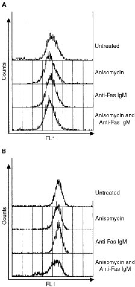 Flow cytometric analysis of Fas receptor (A) or Fas ligand (B) expression in untreated DU 145 cells or following 8 h incubation with anisomycin (250 ng ml−1), anti-Fas IgM (200 ng ml−1) or both. Data are representative of at least three independent experiments and similar data were obtained for incubations of 1, 2 and 4 h.