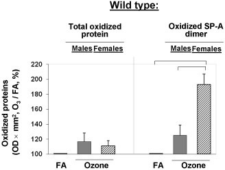 Net effect of ozone exposure on total protein oxidation and SP-A oxidation in BAL of WT male and female mice. The data for ozone-exposed mice are from Figures 6B and 7B and they were normalized to the control (FA) that was set equal to 100%. The average of OD × mm2 for FA-exposed mice (control) was calculated for each experiment (n = 4). The net effect of ozone on total protein oxidation and SP-A oxidation in mouse BAL was calculated according to the following formula: OD × mm2 for each ozone-exposed mouse/OD × mm2 of the average for the FA-exposed mice from the same experiment, times 100%. Significant differences are shown with lines above the respective bars. Data were considered as significant if p < 0.05 with a t-test.