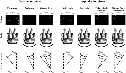 Illustration of the different presentation and reproduction phases defining the six experimental conditions that were studied. The presentation phase was either a purely visual (V to V) or a purely vestibular (B to B) stimulation representing upright passive rotations, or a body rotation coupled with the corresponding visual rotation amplified by a gain factor of 1.5 (VB to V, VB to B, VB to VBsame and VB to VBdiff). In the reproduction phase, subjects were asked to reproduce backwards the perceived rotation in one of the four following sensory contexts: with vision only (V to V and VB to V), body only (B to B and VB to B), or both modalities with the same 1.5 gain (VB to VBsame) or with a different 1.0 gain (VB to VBdiff) than during the presentation
