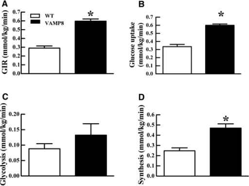 VAMP8 mice have increased whole-body insulin sensitivity, glucose uptake, and glycogen/lipid synthesis. WT (open boxes) and VAMP8 (filled boxes) were subjected to euglycemic–hyperinsulinemic clamps to determine (A) the glucose infusion rate (GIR) necessary to maintain euglycemia. B: Whole-body glucose uptake was determined as [3-3H]-glucose specific activity tracer infusion rate and weight of mice in the basal or euglycemic–hyperinsulinemic clamp state. C: The whole-body glycolysis was determined from the increment of the plasma 3H2O concentration multiplied by the estimated body water divided by [3-3H]-glucose specific activity. D: The glycogen/lipid synthesis was estimated as the difference between whole-body glucose uptake and whole-body glycolysis. These data represent the mean ± SEM from 7–10 individual mice per group. *P < 0.05.