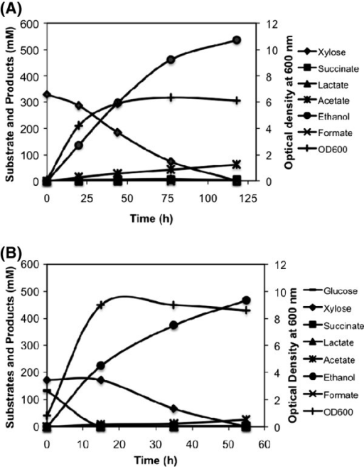 Fermentation profile of SSY09(pZSack) strain grown under microaerobic condition in the bioreactor in complex medium with (A) xylose and (B) mixture of glucose and xylose as carbon source. The profile indicated efficient utilization of xylose and mixture of glucose and xylose under microaerobic condition and production of ethanol with high yield and productivity. Strain description: SSY09(pZSack) - PgapAPDH ΔldhA ΔfrdA Δack ΔpflB (pZSack).