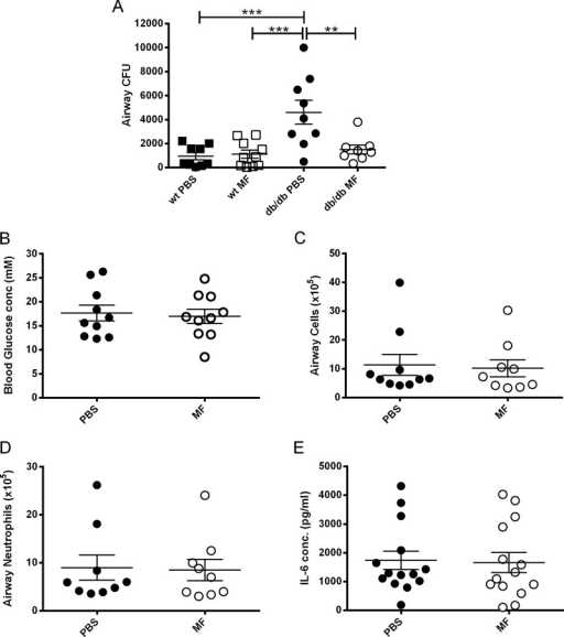Metformin (MF) reduces airway Staphylococcus aureus numbers in hyperglycaemic mice, without lowering blood glucose. Leptin receptor deficient (db/db) mice were inoculated with 107 CFU of S aureus strain 8325-4 intranasally. Before infection mice were treated with 200 μl 40 mg/ml metformin or phosphate-buffered saline (PBS) intraperitoneally. (A) Comparison of bacterial CFU recovered from BAL fluid of untreated and metformin treated wild-type (WT) and db/db mice on day 1 after infection. (B) Blood glucose concentration on the day of infection. (C) Number of cells; (D) number of neutrophils; (E) interleukin 6 (IL-6) concentration in BAL fluid on day 1 after infection. Individual mice are shown as data points, the horizontal bars represent mean ± SEM of n=9–14 ± SEM (pooled experiments), **p<0.01, ***p<0.001. BAL, bronchoalveolar lavage.
