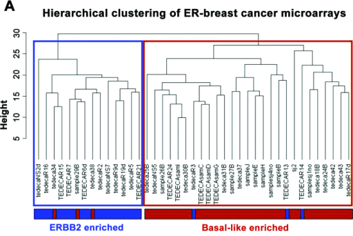 (A) Unsupervised hierarchical clustering (using euclidean distance metric and complete linkage) of the 41 samples from our ER− BC patients, showing the ERBB2-enriched and the basal-like enriched clusters. (B) Plot of the first 2 principal components in our ER− BC microarrays series.