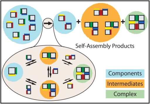 "Self-assembly model for a 4-component square grid (""2×2"") complex.The square, rigid components have specific binding rules on each edge denoted by edge colors. Like colored edges interact, whereas edges with different colors and black edges do not interact. An initial, fixed number of components is depleted during self-assembly. At the end of the process, the solution contains a mixture of components, intermediates and complexes."
