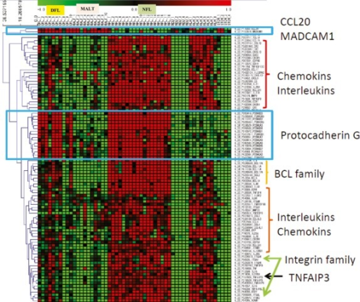 Heatmap of genes of interest, including 84 differentially expressed genes (DEG) and 9 non-DEG: IL2RG, ITGB2, MMP25, IL12RB1, TNFAIP8L2, TNFRSF8, ILDR2, CXCL10 and C3.
