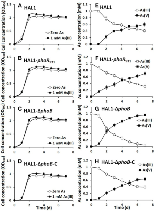 As(III) oxidation was not influenced by phoBR in normal Pi condition. (A–D) The growth curves of strains HAL1, HAL1-phoR931, HAL1-ΔphoB, and HAL1-ΔphoB-C in MMNH4 medium with the presence of 1 mM Pi and 0.8 M NaCl, with or without the addition of 1 mM As(III). (E–H) As(III) oxidation profiles of the same strains. As(III) and As(V) concentrations in the cultural fluids were measured using HPLC-HG-AFS. Data symbols shown in (A) are the same for (B–D), and data symbols shown in (E) are the same for (F–H). Data are shown as the mean of three replicates, with the error bars illustrating one standard deviation.