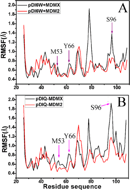 The RMSF of Cα atoms in MDMX and MDM2 through the equilibrium phase of MD simulation.(A) for the inhibitor pDI6W and (B) for the inhibitor pDIQ.