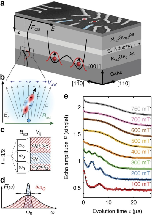 Device layout and quadrupole broadening.(a) Gates used for pulsed qubit control are depicted in blue; the energy of the conduction band edge ECB is shown on the left. (b) Nuclear spins 3/2 with magnetic moment μ in the proximity of the quantum dot experience quadrupolar coupling with electric field gradients Vx′x′ induced by crystal distortion due to the electric field of the triangular quantum well. (c) While the centre transition, with splitting ω0, stays unchanged, the satellite transitions, distorted by the electron's own charge, exhibit a quadrupolar shift by ωQ. (d) The resulting frequency distribution F(ω) consists of two Gaussians with different variances, one showing an excess quadrupolar broadening of δωQ. (e) Echo amplitude for magnetic fields along the [110] axis, showing oscillations with the relative Larmor frequencies of the three nuclear spins. A semi-classical model (solid line) is used to fit the data (dots, offset for clarity).