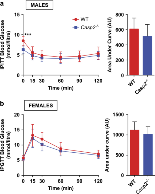 Improved glucose tolerance in aged Casp2−/− mice does not occur in females and is insulin-independent in males. (a) Insulin tolerance test in aged male and (b) aged female WT and Casp2−/− mice. Values are mean±S.D. (n=8–10). Unpaired t-test: ***P<0.01.