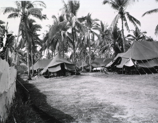 <p>Several tents are pitched amidst palm trees on a grassy plain.</p>