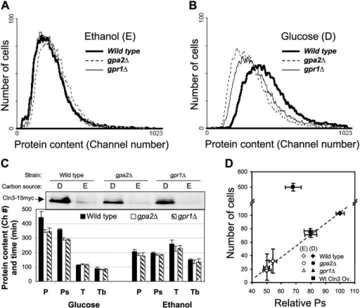 A functional extracellular glucose sensing system is required to properly set cell size (P) and protein content required for S phase initiation (Ps). (A) Size of wild-type cells (thick line), isogenic gpa2Δ cells (dashed line), and gpr1Δ cells (thin line) exponentially growing in ethanol (SCE medium) determined by FACS analysis of total cell protein after FITC staining. (B) Same as A for cells exponentially growing in glucose (SCD medium). (C) Immunoblot showing Cln3 protein level in wild-type and isogenic gpa2Δ and gpr1Δ cells grown in SCD and SCE (lanes labeled D and E, respectively). Extracts were loaded and bands quantified as detailed in Materials and methods. The values of average P, critical P at the beginning of DNA replication (Ps) determined by cytofluorimetric analysis (see Materials and methods for details), and duplication time (T) and length of budded phase (Tb) were determined for wild-type cells (black bars), gpa2Δ cells (white), and gpr1Δ cells (dashed) exponentially growing in SCE and SCD. (D) Cln3 protein levels determined as detailed above, were plotted as a function of Ps for wild-type cells (diamonds), gpa2Δ cells (circles), gpr1Δ cells (triangles), and wild-type cells overexpressing Cln3 (squares). Closed symbols indicate cells grown in SCD, open symbols indicate cells grown in SCE. Either average ± SD of data derived from experiments repeated at least three times (C and D, bar chart) or representative results from one of such experiments (A, B, and Western blot in C) are shown.