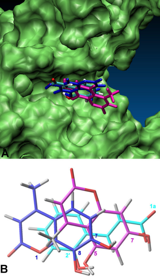 Superimposition of the docked poses of inhibitors 9i, 10i and compound 21. A. the DNA binding site of NF-kappaB p50 (monomer chain A) is highlighted in green; B. the ligand atoms involved in hydrogen bonding are labeled. Compounds 9i, (shown in purple), 10i (shown in blue) and 21 are illustrated in stick representations.