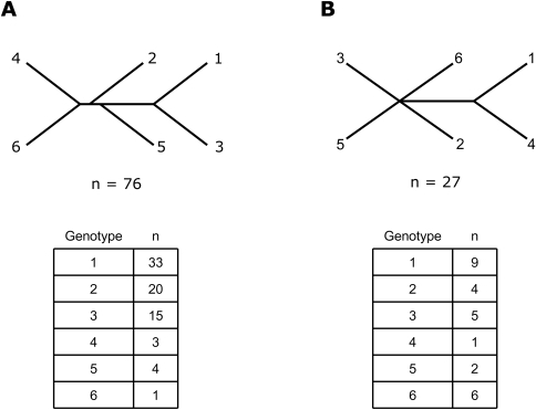 Unrooted HCV Cladograms From Previous Studies.Panel A shows the first cladogram to divide HCV into six genotypes, based on a neighbor-joining analysis of the NS5 region of HCV that included 76 sequences (Simmonds et al. 1993). Panel B shows a more recent HCV consensus tree with a different genotype branching pattern compared to Panel A, based on an analysis of 27 full-length HCV genomic sequences (Salemi et al. 2002). The table below each panel indicates the genotype distribution of the sequences analyzed in these studies.