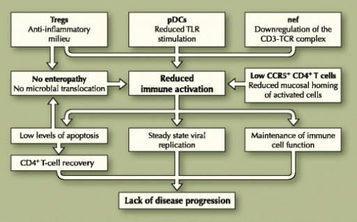 Several mechanisms are involved in the control of immune activation in natural hosts of simian immunodeficiency viruses. In turn, normal levels of immune activation may result in prevention of disease progression through several pathways. pDCs plasmacytoid dendritic cells; TLR Toll-like receptor
