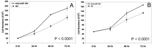 Growth curves for Kelly (A) and SK-N-AS (B) following transfection with the anti-miR-184 (×3 biological replicates). A scrambled anti-miR was used as negative control.