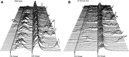 "(A,B) Electromyography (EMG) recorded from eye muscles (orbicularis oculi) of the left upper eyelid during trace eyeblink conditioning. Each line represents EMG activity from an individual trial (1–100, with Trial 1 represented at the bottom of each figure and Trial 100 represented at the top of each figure) from Session 7 of 500-ms trace eyeblink classical conditioning. Total trial length was 1,350 ms. Lines are drawn to approximate the onset of the conditioned stimulus (CS) and unconditioned stimulus (US). There were 249 ms in the pre-CS period before CS onset. CS onset is marked, and then there were 500 ms between CS onset and US onset (marked). There were 601 ms in the post-US period. A response was scored if it exceeded the peak of pre-CS activity by 1.5 units. Performance is shown for a wild-type control mouse (A) and an α7 knockout (KO) mouse (B) that were representative of their respective groups in terms of CR production levels. For the wild-type control mouse shown here (A), 95 of the 100 trials were usable for analyses; the remaining 5 trials were excluded due to excessive pre CS EMG activity. During paired CS–US trials this subject (A) displayed conditioned responses (CRs) on 88% of the trials. Short latency alpha (or ""startle"") responses (0–60 ms after CS onset) occurred in 58% of the paired CS–US trials. For the α7 KO subject (B), 93 of the 100 trials were usable for analysis. During paired CS–US trials there were 63% CRs and 24% alpha responses."