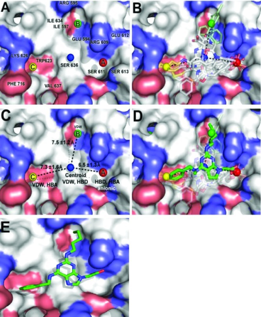 GOLD docking and quantitative structure-activity relationship studies, and pharmacophore modeling of the binding of Stat3 to small-molecule dimerization inhibitors. (A) Stat3 SH2 domain binding sites and key amino acid residues, (B) Stat3 inhibitors GOLD-docked and overlaid with the Stat3 SH2 domain, (C) Pharmacophore plot identifying the optimal distances for the projection of functionality from the centroid unit, (D) A GOLD docked purine derivative superimposed over the pharmacophore plot and previously docked Stat3 inhibitors, and (E) Low energy GOLD-docked 8aa in the Stat3 SH2 domain (pdb: 1BG1).