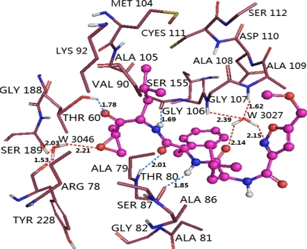 Docked conformations derived for molecule 11 of EPK (shown in ball and stick model) with the β5 subunit of human proteasome. H-bonds formed between residues and molecule directly and mediated by water indirectly are shown as dotted lines with blue and red color, respectively. W3027 and W3046 represent water molecules. The nonpolar hydrogen atoms are removed for clarity.