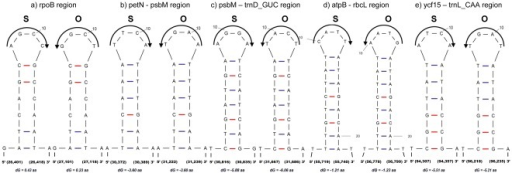 Small inversion mutations and associated secondary structures between the cp genomes of Sesamum (S) and the cp genome of Olea (O).