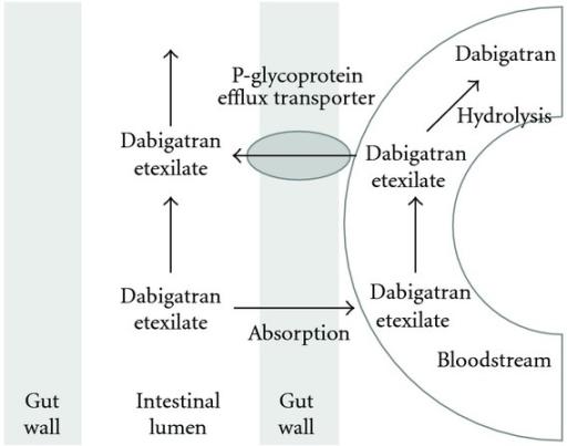 Prevention strategies for atrial fibrillation afib or af