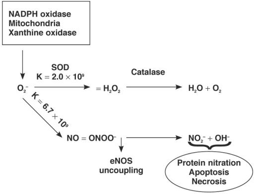 superoxide dismutase oxidative stress Oxidative stress and superoxide dismutase activity in brain of rats fed with diet  containing permethrin olawale otitoju1, ikechukwu n e onwurah2,  grace.