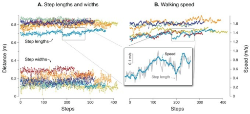 Step-by-step variability of overground walking.(A) Step length and width are observed to vary, apparently randomly, over many overground steps (different color for each subject). (B) Walking speed also fluctuates, albeit more slowly. Examination of speed and step length together (scaled and overlaid in inset diagram) reveals that the two may in fact co-vary. Data shown are all trials performed by six representative subjects.