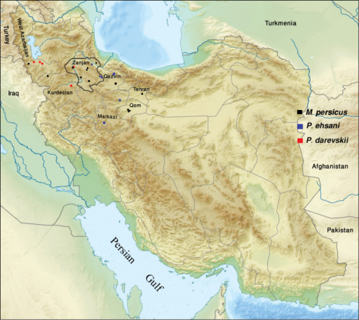 Map of Iran indicating the sampling localities of Mongoloniscus persicus sp. n. (in black), Protracheoniscus ehsani sp. n. (in blue) and Protracheoniscus darevskii (in red).
