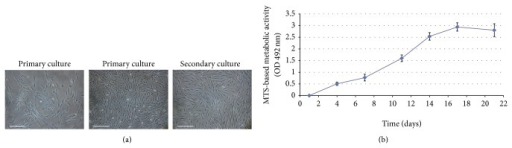 Cell morphology and proliferative curve of canine Ad-MSCs cultures. (a) In primary cultures, a large number of adherent cells with fibroblastic morphology were observed from the first day of culture, forming frequent CFUs. On secondary culture, canine Ad-MSCs appeared as spindle-shaped cells that were grown in a monolayer. Bars 200 μm. (b) Representative curve obtained with MTS cell proliferation assay at p2 showing from 24 hours an important proliferative capacity, initiating the logarithmic growth phase, and reaching its plateau phase around 14 days.