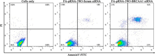 Determination of cell death by flow cytometry of Annexin V-FITC/PI staining in MGC803 cells transfected with 25 nM FA-pRNA-3WJ-BRCAA1siRNA or FA-pRNA-3WJ-Scram-siRNA for 48 h.
