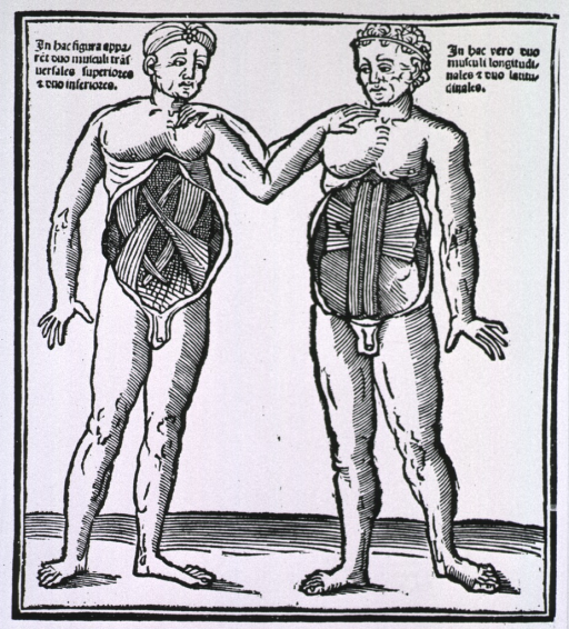 <p>Two male figures with dissected abdomens exposing the abdominal muscles.</p>