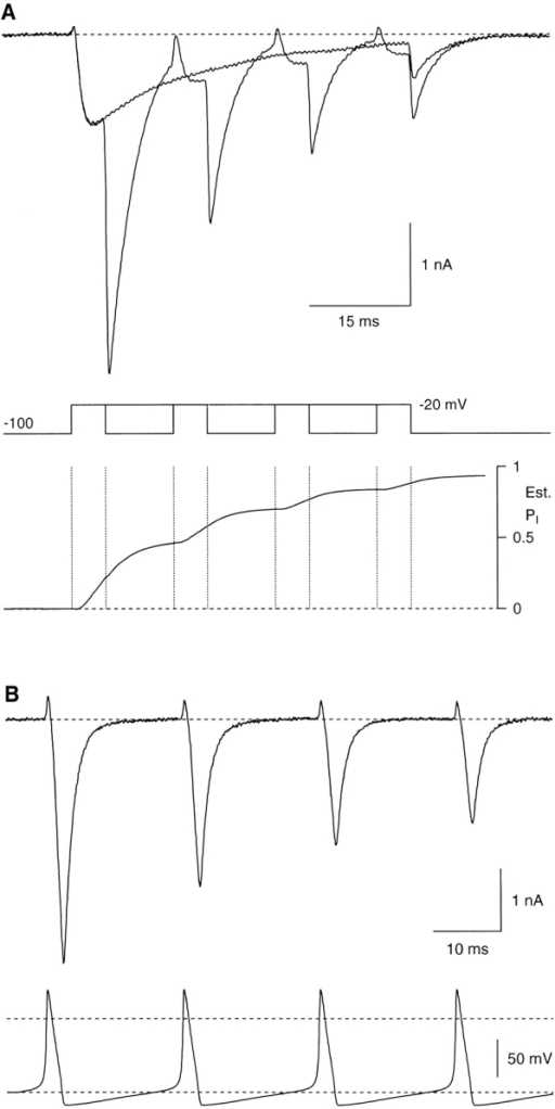 "Cumulative inactivation. (A) The upper panel is two superimposed current records, a single 50-ms depolarization to −20 mV, and four steps to −20 mV for 5 ms each, separated by 10-ms intervals at −100 mV. The lower panel is the predicted open-state inactivation for the four-pulse protocol. Cell a8612, 2 kHz Gaussian filter. (B) Inactivation during a train of four action potential–like depolarizations. Cell e8612, 5 kHz Gaussian filter. The voltage command (shown below) was simulated from the Hodgkin-Huxley (1952b) model for the squid axon, modified to allow spontaneous 50-Hz repetitive firing by shifting the voltage dependence of the ""m"" gate by 2 mV to more negative voltages. The action potentials were scaled to an initial voltage of −100 mV, with an overshoot of +39 mV. The dashed lines are at 0 and −100 mV."